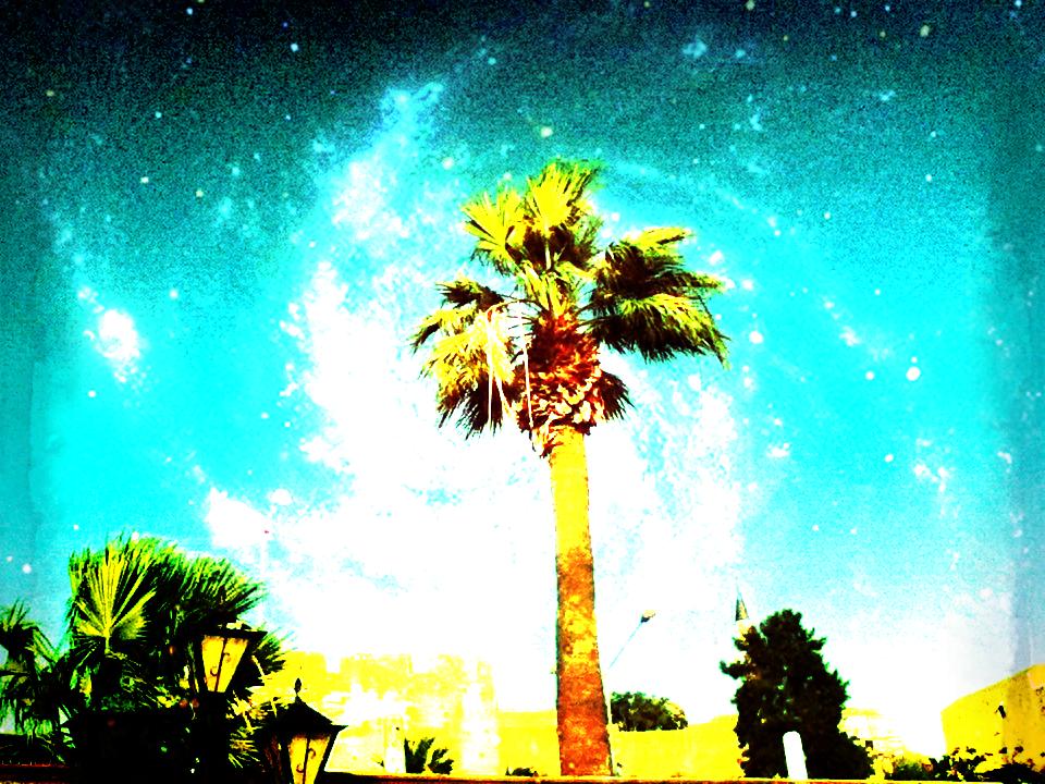 palme1.png
